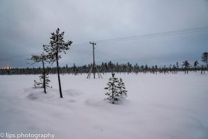 Finnland_2015 (103)
