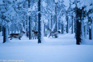 Finnland_2015 (152)