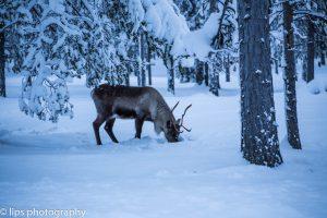Finnland_2015 (153)