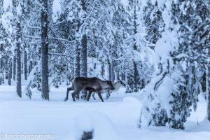 Finnland_2015 (154)
